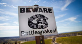 What to Do If You're Bitten by a Snake